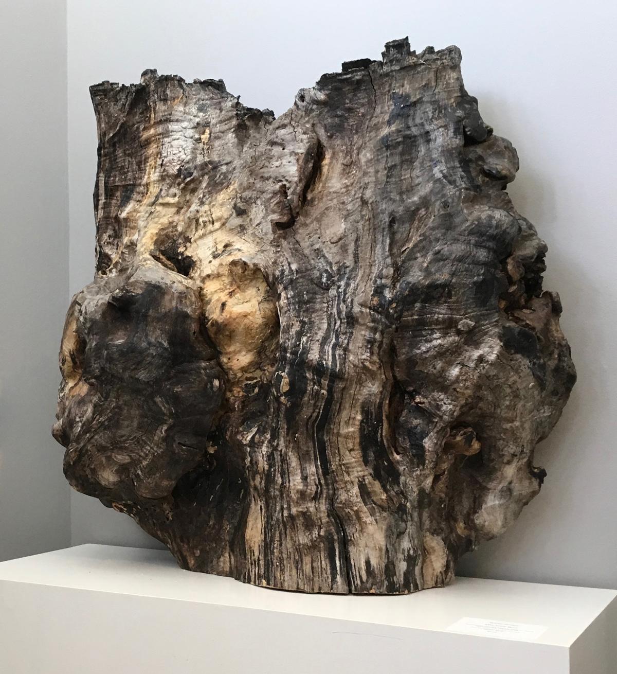 Bobby Jacobs, Mid-Tree Burl